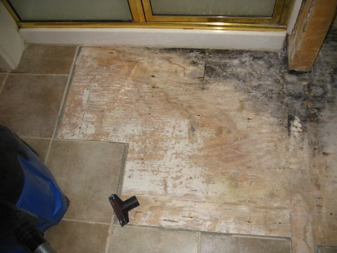 Mold as a result of a leaky shower stall